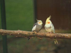 two birds branch 181624 8901